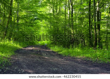 A dirt road in the mixed forest (beech, oak and alder), summer, by Beckingen, Saarland / Germany,
