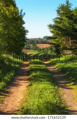 A dirt road running through farmland in rural Prince Edward Island, Canada. - stock photo