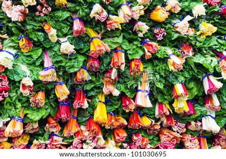 A display of colorful swiss chard - stock photo