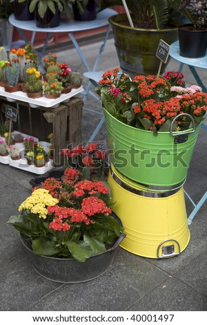 A display of flowers and plants for sale - stock photo