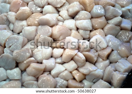 A display of fresh scallops - stock photo