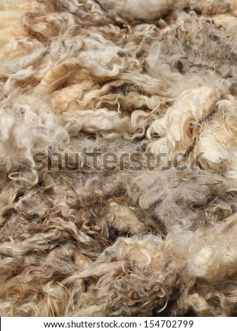 A Display of Wool Taken from a Adult Sheep. - stock photo