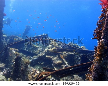 A diver discovering the wreck with the beautiful coral reef around