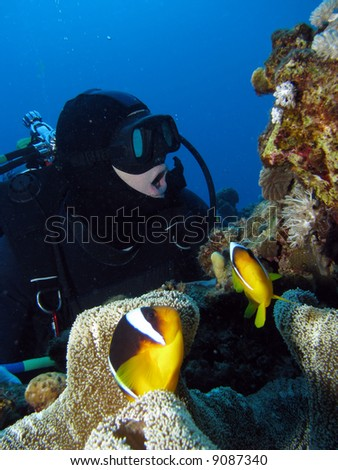 A diver opening his mouth to imitate the clownfish in front of him. - stock photo