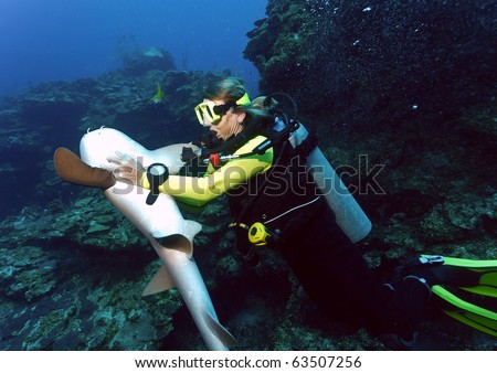 A diver sends a nurse shark into a temporary relaxed hypnotic state by rubbing its white underbelly. - stock photo