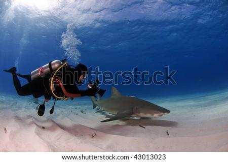 A diver videotapes the movement of a small lemon shark at Tiger Beach, Bahamas - stock photo