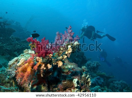 A divers floating over a coral reef
