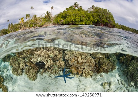 A diverse array of reef-building and soft corals grow in shallow water near a tropical island in the Solomon Islands.  This area is found within the Coral Triangle and is high biological diversity. - stock photo