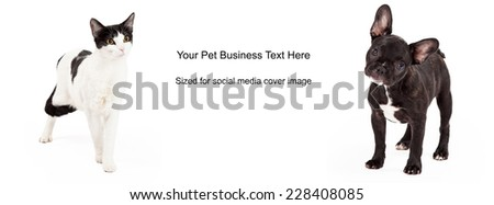 A dog and a cat with black and white fur standing against a white background. Image cropped to the size of a social media timeline cover placeholder - stock photo