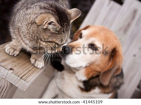 A dog and cat getting friendly with each other. - stock photo