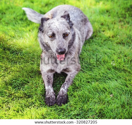 a dog at a local park panting with his or her tongue hanging out  - stock photo