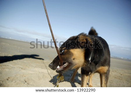A dog at the beach playing with her owner - stock photo