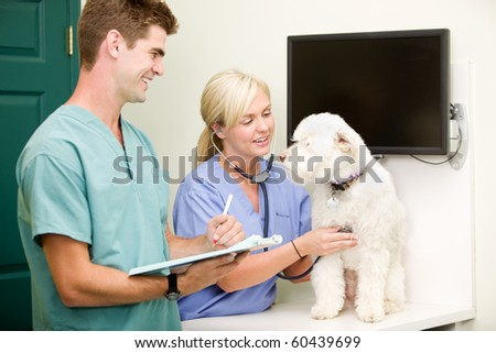 A dog at the vet having a check-up - stock photo