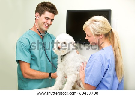 A dog at the vet having his heart rate measured - stock photo