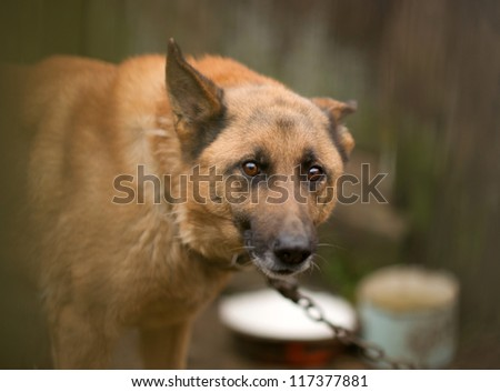 A dog behind the fence - stock photo