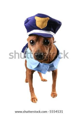 A Dog Dressed in a Humorous Police Officer Uniform Costume - stock photo