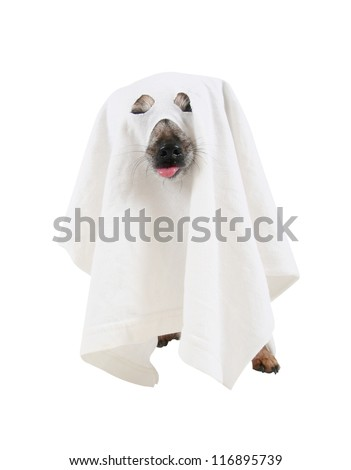 a dog dressed up as a spooky ghost - stock photo