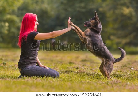 A dog giving a paw or high-five - stock photo