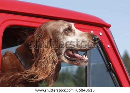 A dog going for a ride in a red truck.