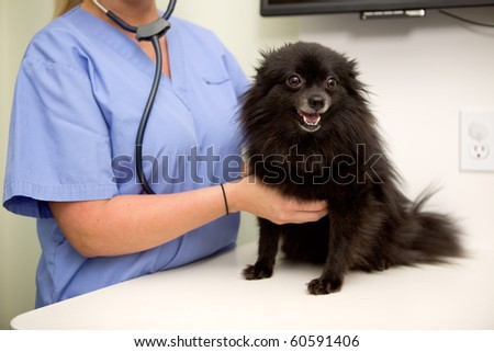 A dog having it's heart rate checked at the vet clinic - stock photo