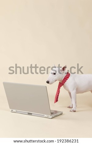 A dog in a tie looks at a laptop. - stock photo
