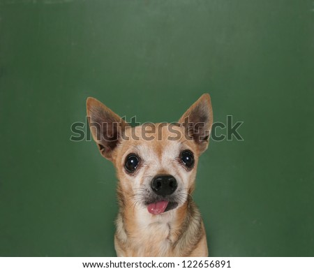 a dog in front of a chalkboard with commands written on it - stock photo