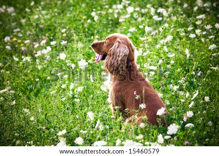 A dog in the grass - stock photo
