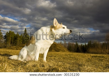 A dog is sitting and enjoying the sun, in the background forest and dark clouds