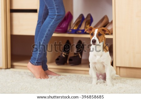 A dog is waiting while girl is choosing clothes in her dressing room - stock photo