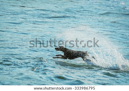 A Dog Jumping into the Black Sea