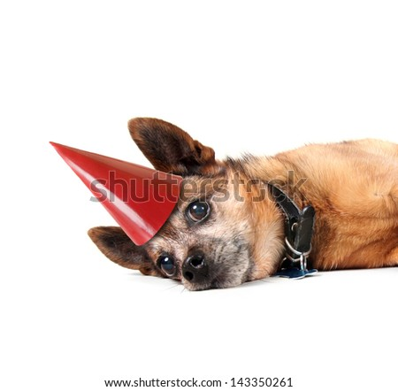 a dog laying down on his side with a birthday hat on - stock photo