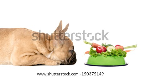 a dog lies before a feeding bowl full of vegetables - stock photo