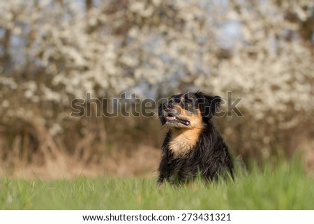 A dog lies in the grass and looking attentively to the side - stock photo