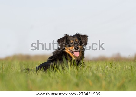 A dog lies on a grass and looks happy into camera - stock photo