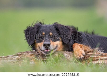 A dog lies on a tree trunk and looks funny in the camera - stock photo
