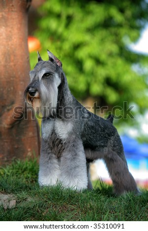 a dog look at me - stock photo