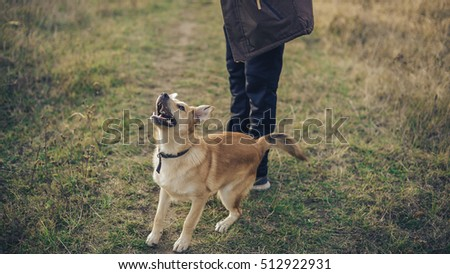 A dog on a walk with a guide on an autumn day