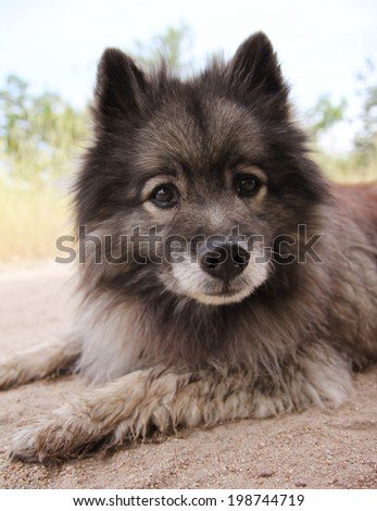 a dog on a walking path at a local nature park - stock photo