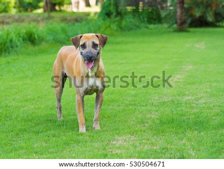 a dog on green grass