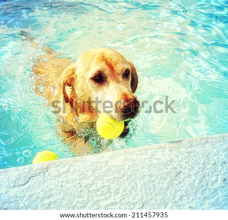 a dog out enjoying a swim in a pool toned with a soft painterly filter  - stock photo