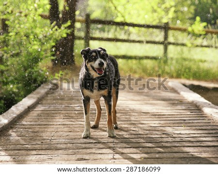 a dog out in nature in a thunderstorm with rain falling on her - stock photo