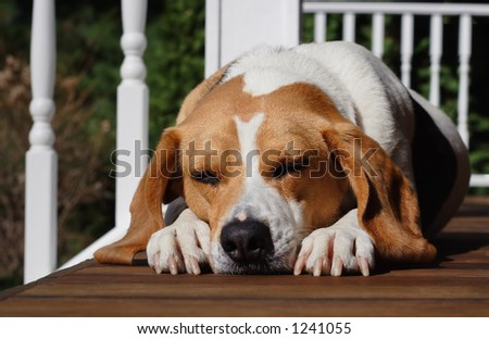 A dog's life - stock photo