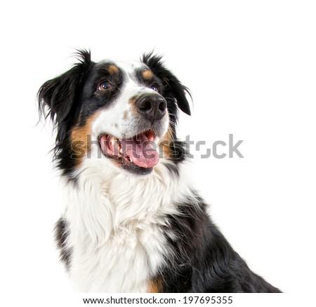 a dog sitting - stock photo