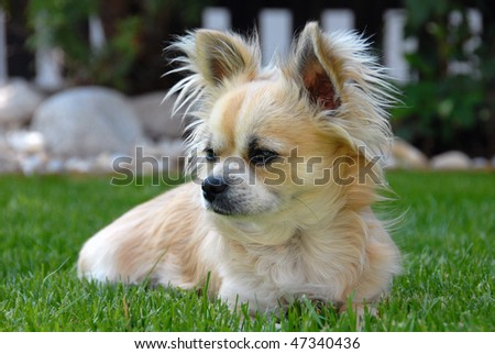 A dog sitting in the grass - stock photo