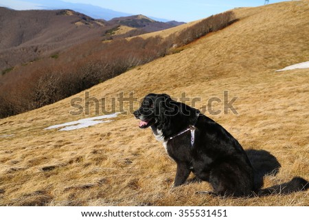 a dog sitting on a mountain top looking over a skyline - stock photo