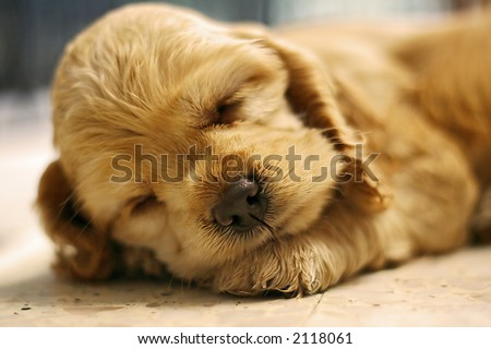 a dog sleeping - stock photo