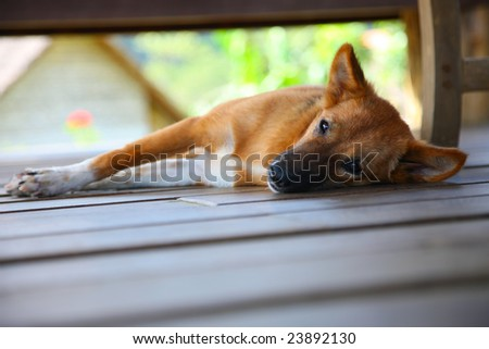 a dog sleeping on a wooden deck