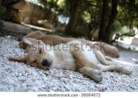 A dog sleeps comfortably on a road  in Athens - stock photo