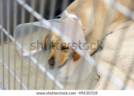 a dog sleeps in an animal hospital - stock photo