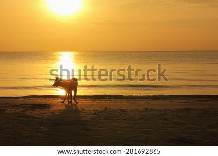 A dog standing at the beach, silhouette of the nature - stock photo